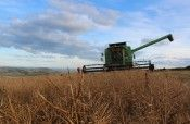 When the Oilseed Rape plant turn Brown it's ready to harvest :-)
