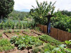 la rotazione delle colture nell'orto
