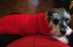Christmas Sweater Time!   Lilli Lillerson