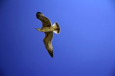 Bird by Vencislav Stanchev on 500px