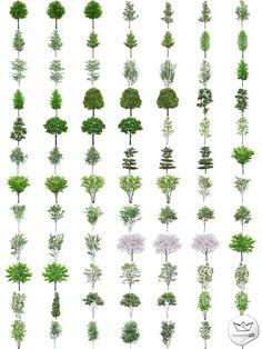 Bomen in hoge resolutie PNG (PNG transparante bomen) | Resources 2D.com
