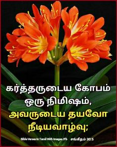 Bible Words Images, Tamil Bible Words, Bible Quotes, Bible Verses, Image Fb, Christian Verses, King Of Kings, Christianity
