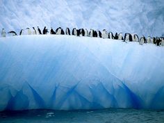 Iceberg Penguins Photograph by Ralph Lee Hopkins   A group of chinstrap penguins lines the edge of an iceberg adrift in Antarctic waters.
