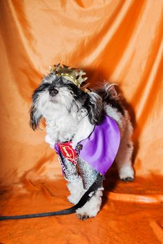 These Dogs In Costumes Are The Best Thing You'll See All Week #refinery29  http://www.refinery29.com/2016/10/127501/halloween-dog-costumes-tompkins-square-nyc#slide-11  A pose befitting a regal costume....