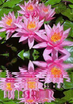 Resultado de imagem para ramo de rosas em gif animado