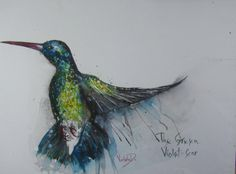 ARTFINDER: The Hummingbird (The Green Violet-Ear) by Violeta Damjanovic - The Hummingbird (The Green Violet-Ear) is painted in watercolor technique, 425 gsm watercolor paper Hahnemühle, size 39 x 29 cm.