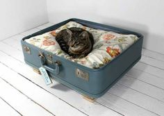 :: pet furniture :: Just in time for those beautiful tapestry-fabric suitcases that no one would fly with anymore?
