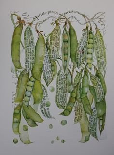 "Illustration by Sara Midda - I own a beautiful book of hers called ""In and Out of the Garden. Botanical Drawings, Botanical Prints, Art Journal Pages, Art Journals, Illustrations, Illustration Art, Marjolein Bastin, Poster Art, Nature Journal"