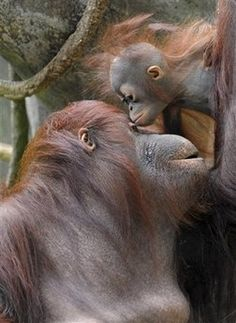 Mother's LOVE, what ever animal you are