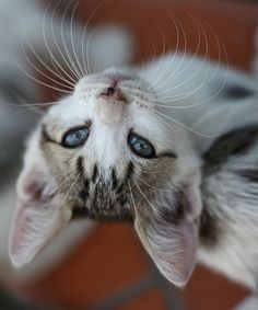 zazie by summer mornings, via Flickr...had to pin this special kitty. so beautiful, that wolf-like face!