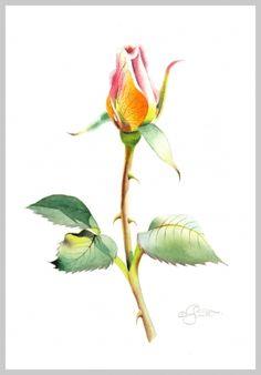 Rosebud, painting by artist Jacqueline Gnott