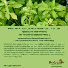 Tulsi mantra to seek prosperity and health.