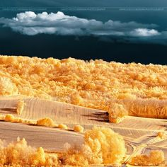infrared photography - landscape - By David Keochkerian
