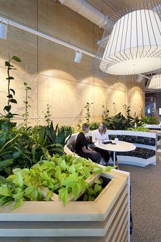 Geyer recently worked with Rio Tinto on the development of their new Regional Centre in Brisbane. Interior Design Plants, Interior Garden, Office Interior Design, Office Interiors, Small Office Organization, Green Lounge, Office Plants, Garden Office, Pot Plante