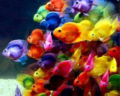 neon school fish photograph I love the colors