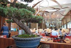 Breakfast among the bonsai アンダーズ 東京 - Andaz Tokyo, Tokyo, Japan