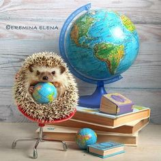 Happy Hedgehog, Cute Hedgehog, Funny Hamsters, Funny Cats, Simple Wood Carving, Animal Humour, Book Nooks, Animal Kingdom, Art Reference