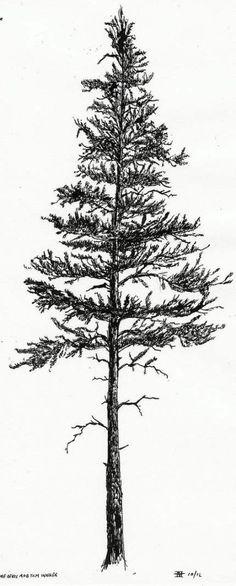 Eastern white pine tree tattoo u. states 32 ideas for 2019 Pine Tattoo, Tree Tattoo Arm, Tree Tattoos, Mandala Tattoo, Kiefer Tattoo, Forest Tattoos, Tree Tattoo Designs, Tattoo Ideas, Tree Sketches