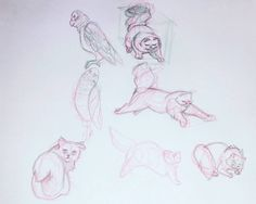 #sketch #sketchbook #animals #study #reference these references will help me work on animal/human hybrid characters