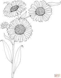 85 Best sunflower coloring page van gogh images in 2017