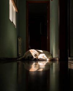"114 Me gusta, 3 comentarios - Cristian Blázquez Martínez (@crisblazmar) en Instagram: ""Cuarentenas al sol. . . #dog #labradorretriever #perro #sunshine #rayosdesol #rayodeluz #ventana…"" Personal Image, Instagram, Furniture, Home Decor, Sun Rays, Windows, Decoration Home, Room Decor, Home Furnishings"