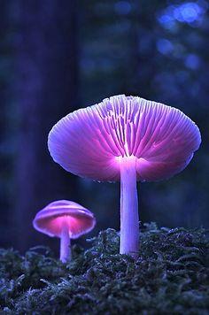 #purple #lilac #lilas