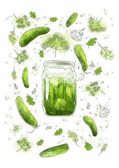 Pickled Cucumbers with Dill in a Jar Seasonal Kitchen by RNDMS