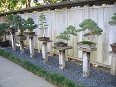Bonsai at the Huntington Library Botanical Gardens in California. My next collection. Japanese Garden Design, Chinese Garden, Bonsai Plants, Bonsai Garden, Bonsai Trees, Garden Center Displays, Japan Garden, Meditation Garden, Garden Inspiration
