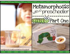 Mrs. Jones' Creation Station: Metamorphosis with a Preschooler: Part One