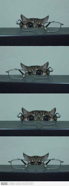 Kitty through spectacles.