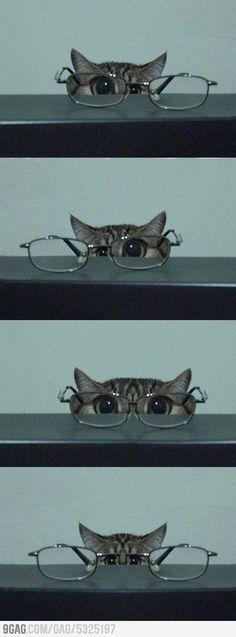 Kitten and Glasses