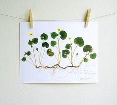 PRINT of Yellow Violet Herbarium Specimen Art, Pressed Botanical Art, Pressed Flower Art Print, Viola Plant with Roots, Scientific Artwork