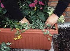 Container gardening - landscape nl.com Green for Life
