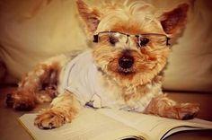 Estudando  para o Enem... #enem2016 #rafinha #saudades #yorkshire #dogs #amordecao