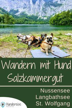 Dog Travel, Wanderlust Travel, Happy Dogs, Campervan, All Dogs, Dog Mom, Where To Go, Dog Training, Austria