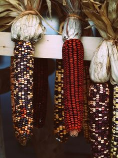 Indian corn. Repinned from Vital Outburst clothing vitaloutburst.com