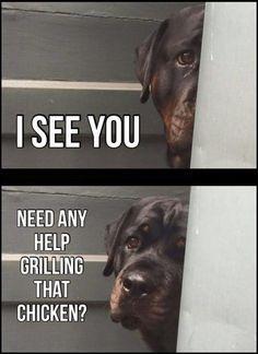 rottweiler funny meme