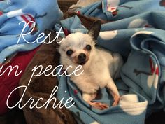 Archie you saw some warm days this winter and got to bask in the sun.  Despite  your poor state in rescue you lived to over 18 years.  Will miss you 1/7/16