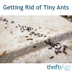 Both borax powder and diatomaceous earth can be effective in deterring ants. This is a guide about getting rid of tiny ants. Borax Powder, Pest Control, Ants, Rid, Laundry, Camping, Homemade, Garden, Projects