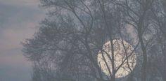 twitter header - moon + tress