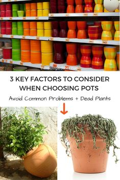 These practical tips will help you avoid common problems like dead plants from dry or waterlogged soil and broken pots or damaged plants by choosing the wrong pot for your situation. Simple but valuable advice! Healthy Vegetables, Healthy Fruits, Garden Tips, Garden Ideas, Jungle Vibes, Grow Together, Container Flowers, Urban Farming, Houseplant
