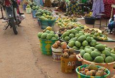 Casamance: La mouche des mangues privent les producteurs de sommeil