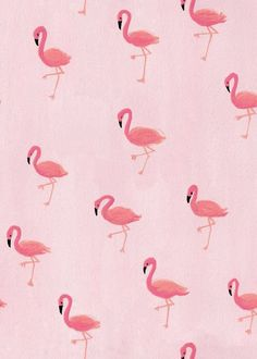 #Wallpapers #Flamingos