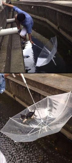 When this daring rescue attempt paid off. | 23 Reminders That Humans Can Actually Be Really Sweet