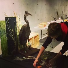 Arranging animals in the pond case of the Backyard Biodiversity Exhibition.