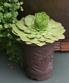 I love how succulents can grow just about anywhere you put them. This would be awesome in one of those strawberry pots!