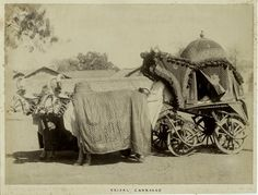 An albumen print showing a covered palanquin drawn by a pair of decorated oxen. An inked inscription in a period hand in the lower margin reads 'Bridal carriage'. Indian Pictures, Old Pictures, Old Photos, Rare Photos, Jaisalmer, Udaipur, History Of India, Art History, Vintage Photographs