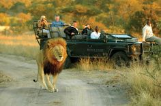 Everything you need for your Safari to the Kruger National Park and the rest of Africa. The best rates for guided Safari Tours and all types of Budget & Luxury Accommodation. Kruger National Park Safari, National Parks, Volunteer Tourism, South Africa Holidays, South Africa Safari, Safari Holidays, Private Games, Wildlife Safari, Game Reserve