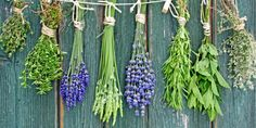 8 Herbs You Can Grow For Medicinal Purposes. Herbs are some of the easiest plants you can grow at home. You'll have fresh herbs whenever you want and they won't cost you the earth! Organic Herbs, Organic Gardening, Herb Gardening, Aquaponics Garden, Aquaponics Kit, Gardening Vegetables, Vegetable Garden, Detox Herbs, Herb Wall