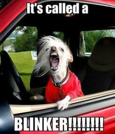 Animals with road rage